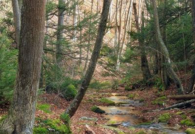 lemn, natura, copac, stream, peisajul, mediu, frunze, padure