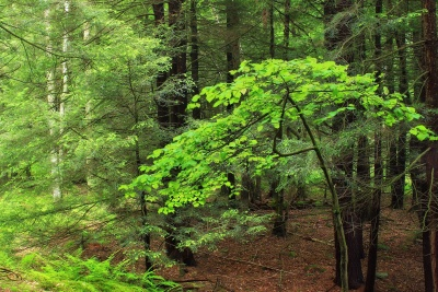 wood, nature, leaf, landscape, tree, forest, green leaves, moss