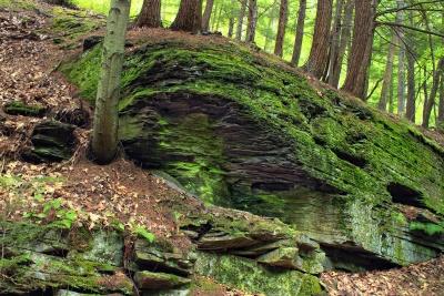 wood, tree, nature, moss, landscape, leaf, environment, flora, ecology