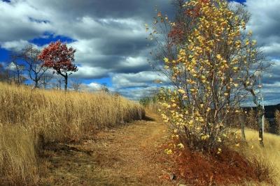 tree, landscape, nature, wood, leaf, countryside