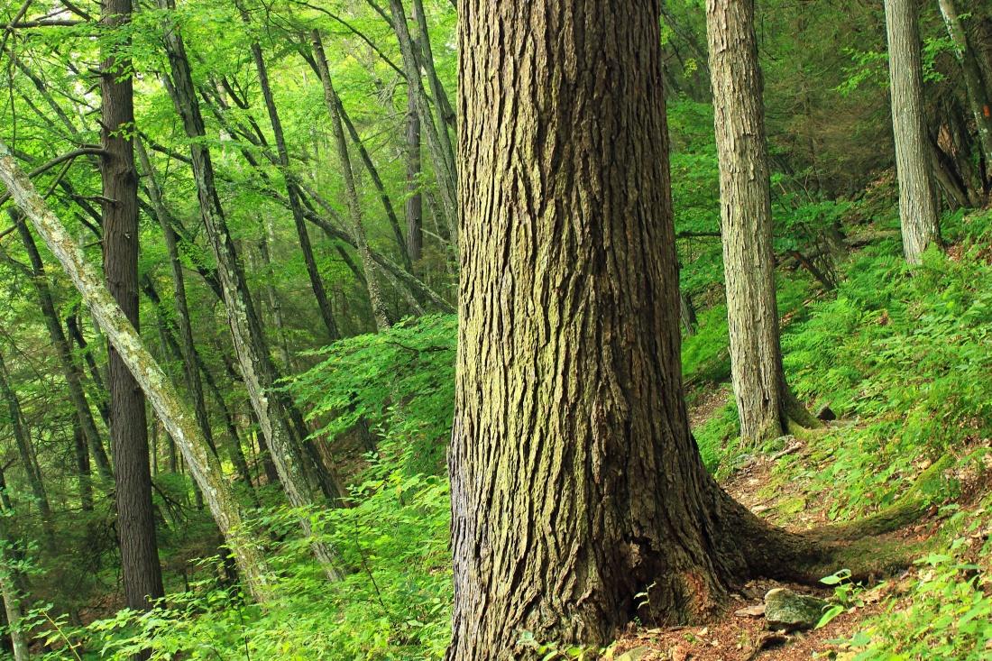 wood, nature, tree, leaf, landscape, bark, forest, spring, moss, green
