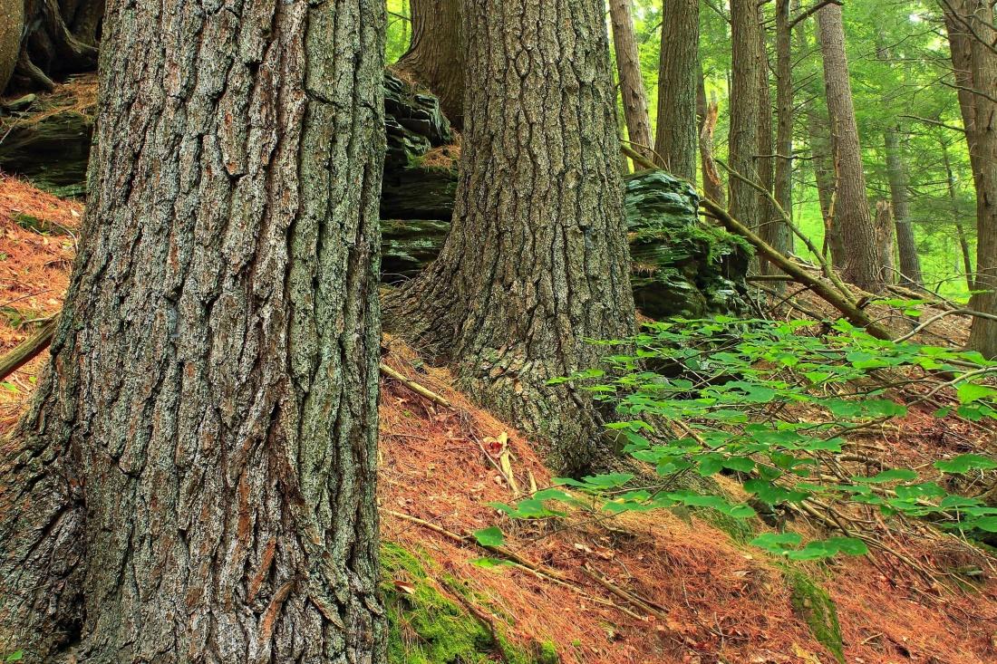wood, tree, nature, leaf, landscape, oak, moss, forest, landscape