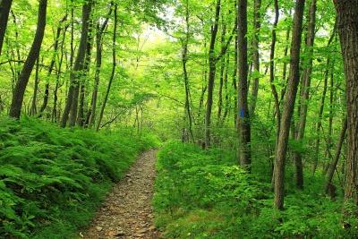 madera, hoja, paisaje, naturaleza, árbol, medio ambiente, camino, bosque