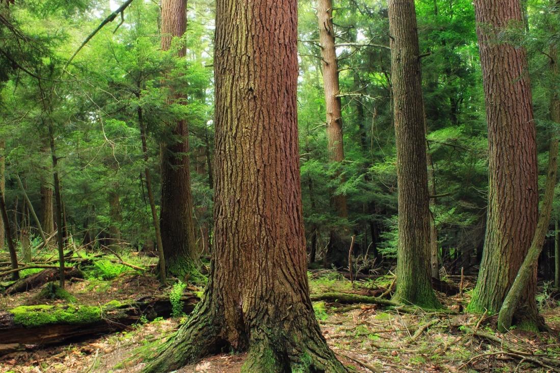 wood, tree, nature, leaf, landscape, forest, ecology, fern, grass
