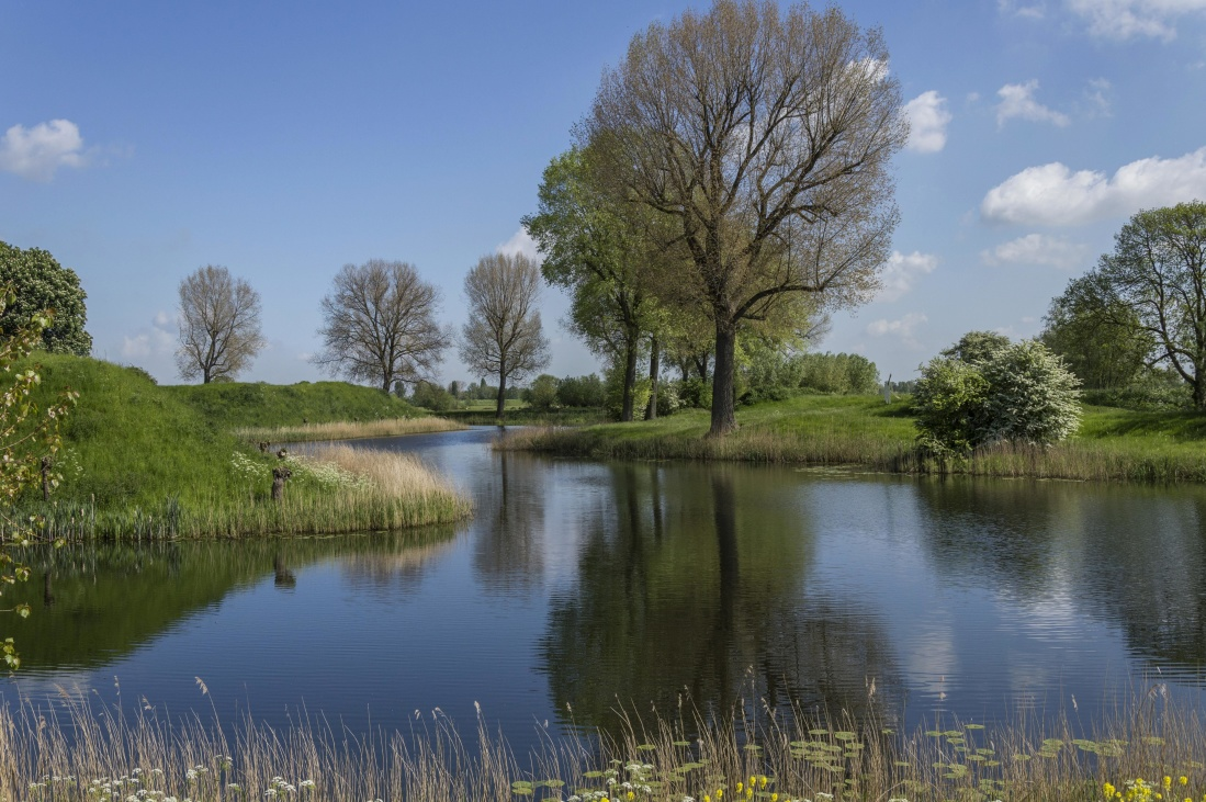 water, nature, tree, landscape, lake, river, grass, summer