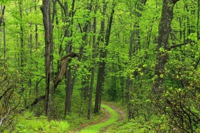 madera, naturaleza, paisaje, árbol, hoja, medio ambiente, bosque, camino
