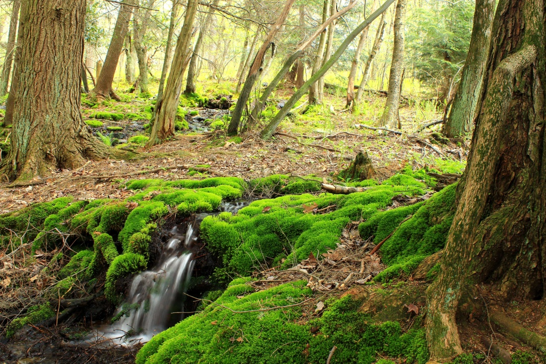 wood, nature, tree, landscape, leaf, moss, forest