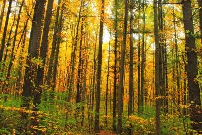wood, leaf, tree, landscape, nature, dawn, forest, fern, autumn