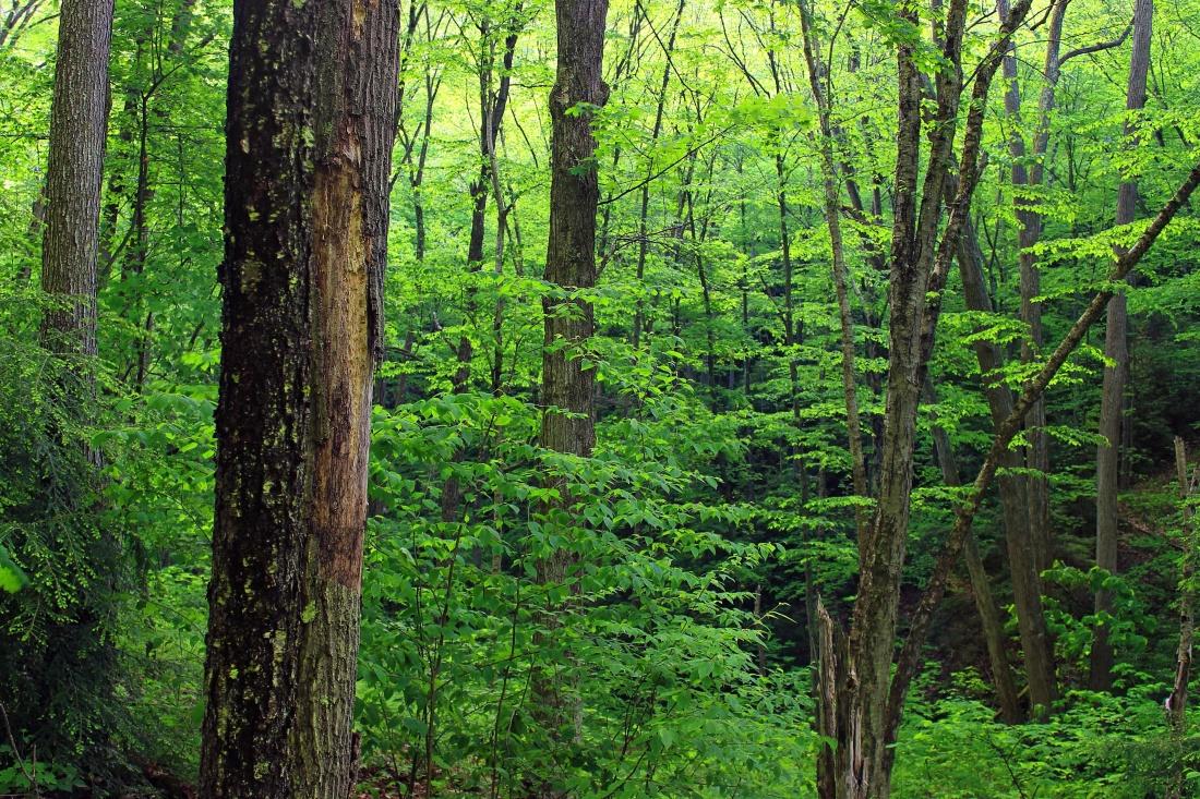 wood, nature, tree, leaf, landscape, oak, moss, grass, forest