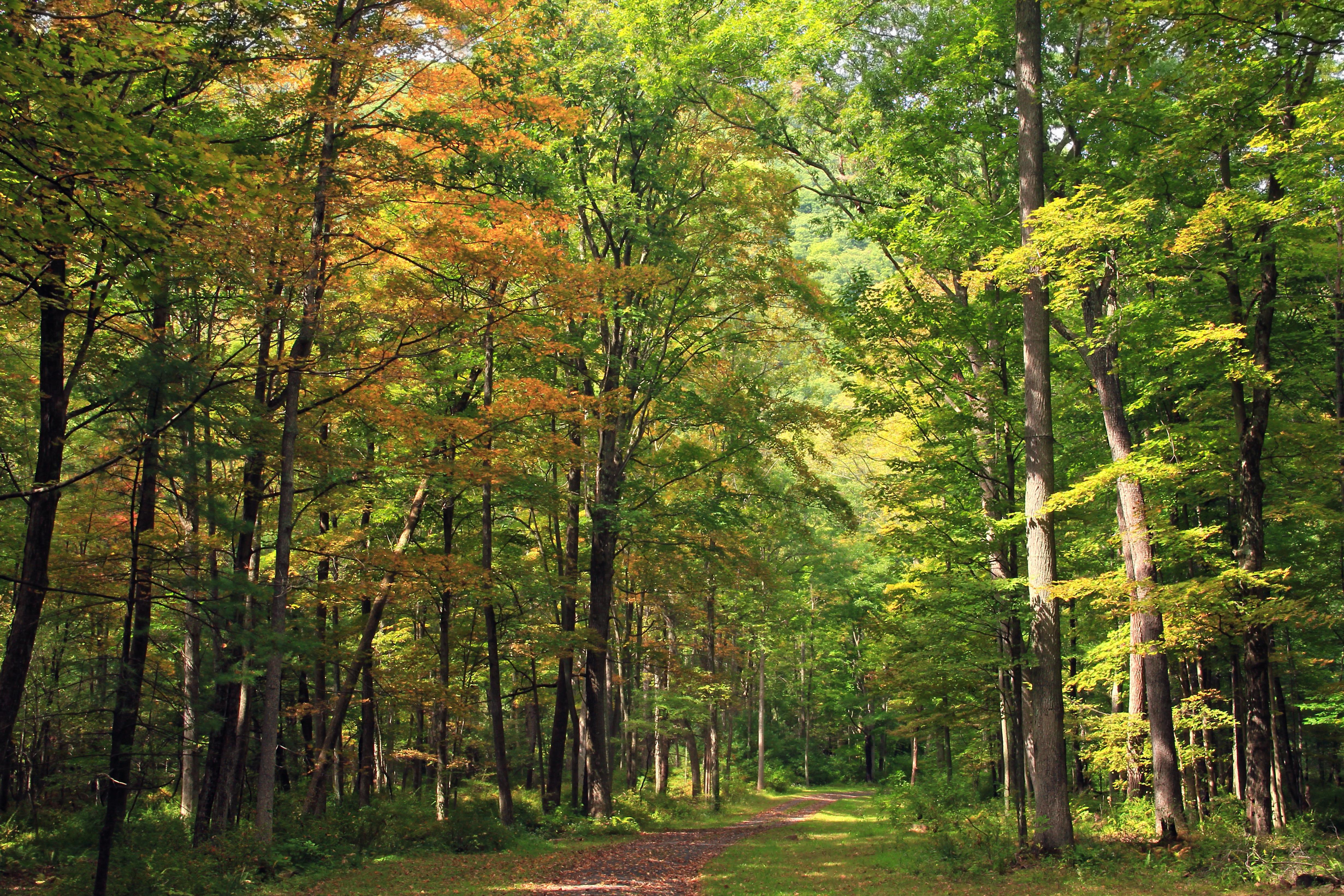 дубовый лес фото хотя системы