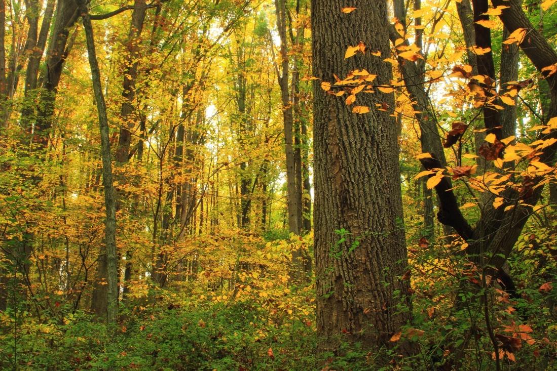wood, leaf, nature, autumn, grass, leaf, foliage, trees, leaves, forest, landscape