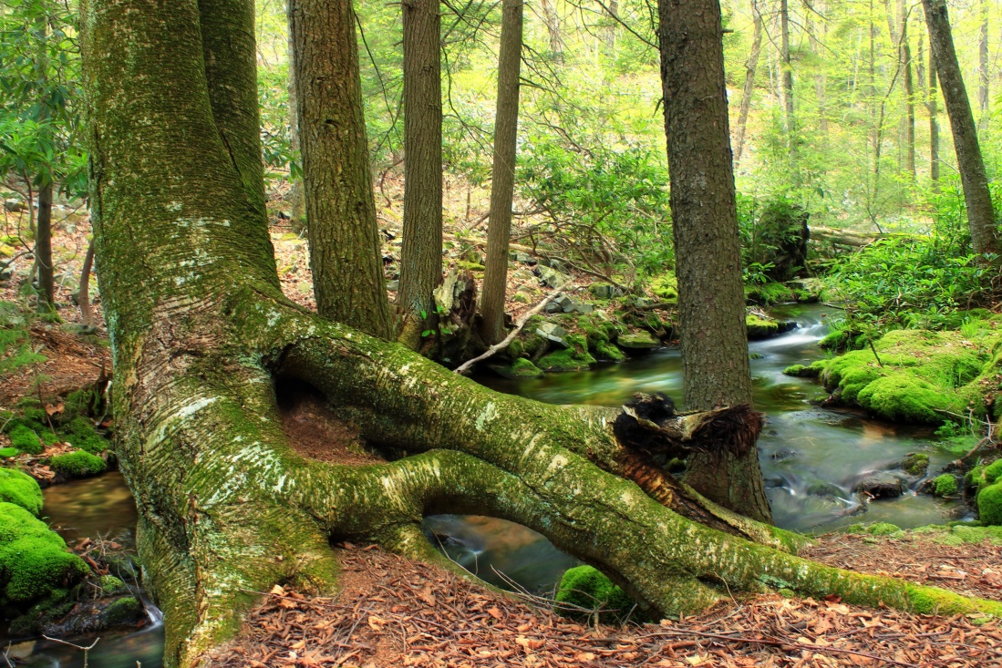 wood, tree, nature, leaf, moss, environment, landscape, oak, stream