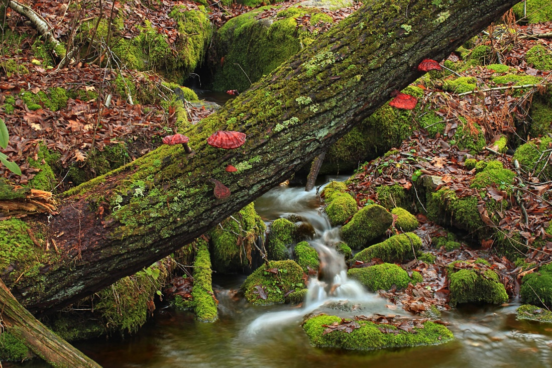 leaf, wood, nature, tree, water, stream, moss, river, waterfall