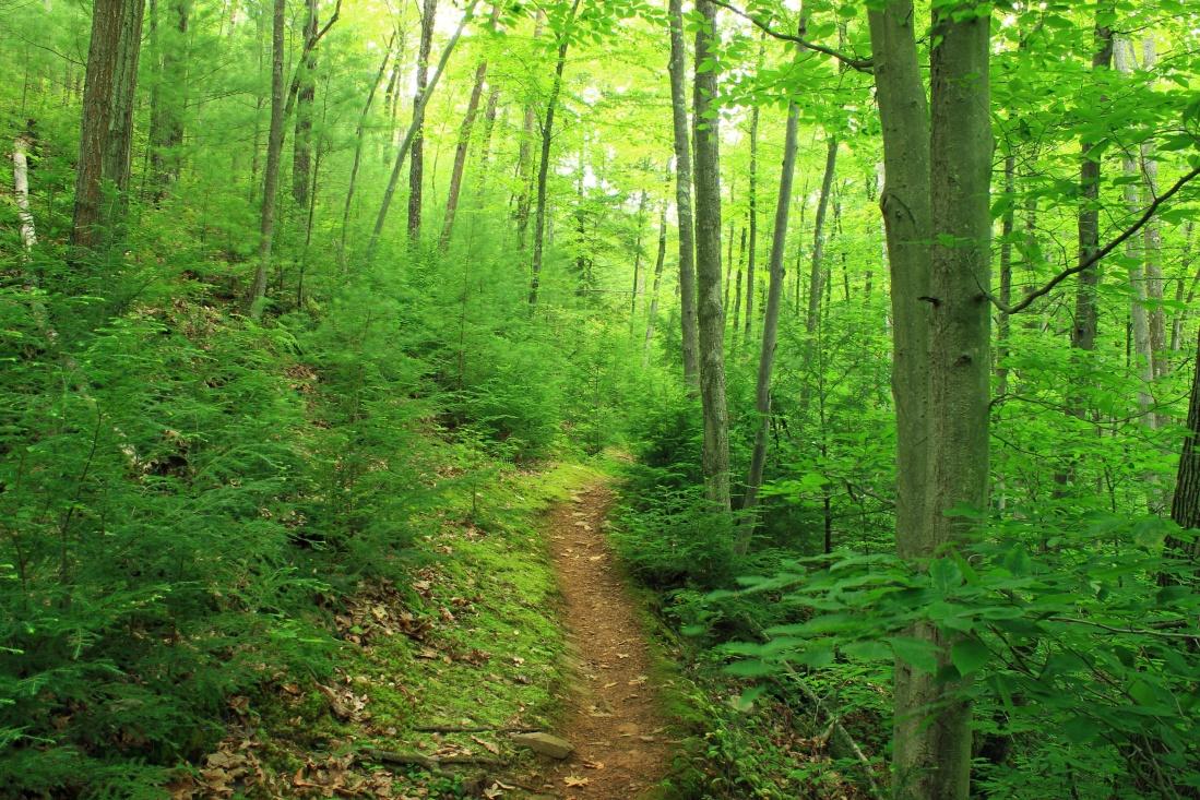 wood, nature, landscape, leaf, tree, forest, green, ecology, vegetation, grass