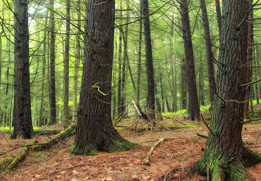 wood, tree, nature, landscape, oak, leaf, environment, dawn
