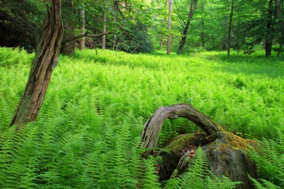 wood, nature, summer, flora, grass, dawn, fern, landscape, tree, leaf, environment
