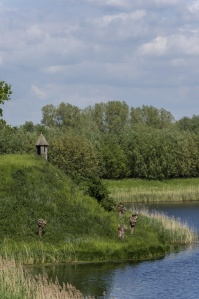 пейзаж, дърво, вода, езеро, река, природа, небе