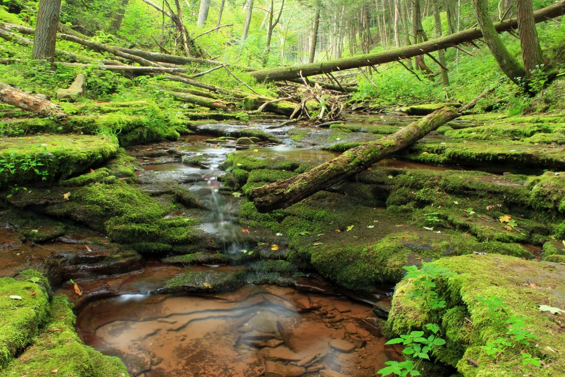 river, nature, water, moss, landscape, leaf, tree, waterfall, forest