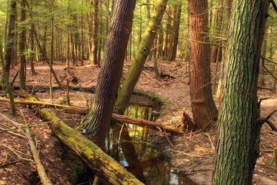 puu, puu, luonto, lehtiä, maisema, ympäristö, joki