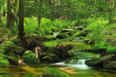 wood, nature, water, landscape, leaf, tree, moss, waterfall, forest