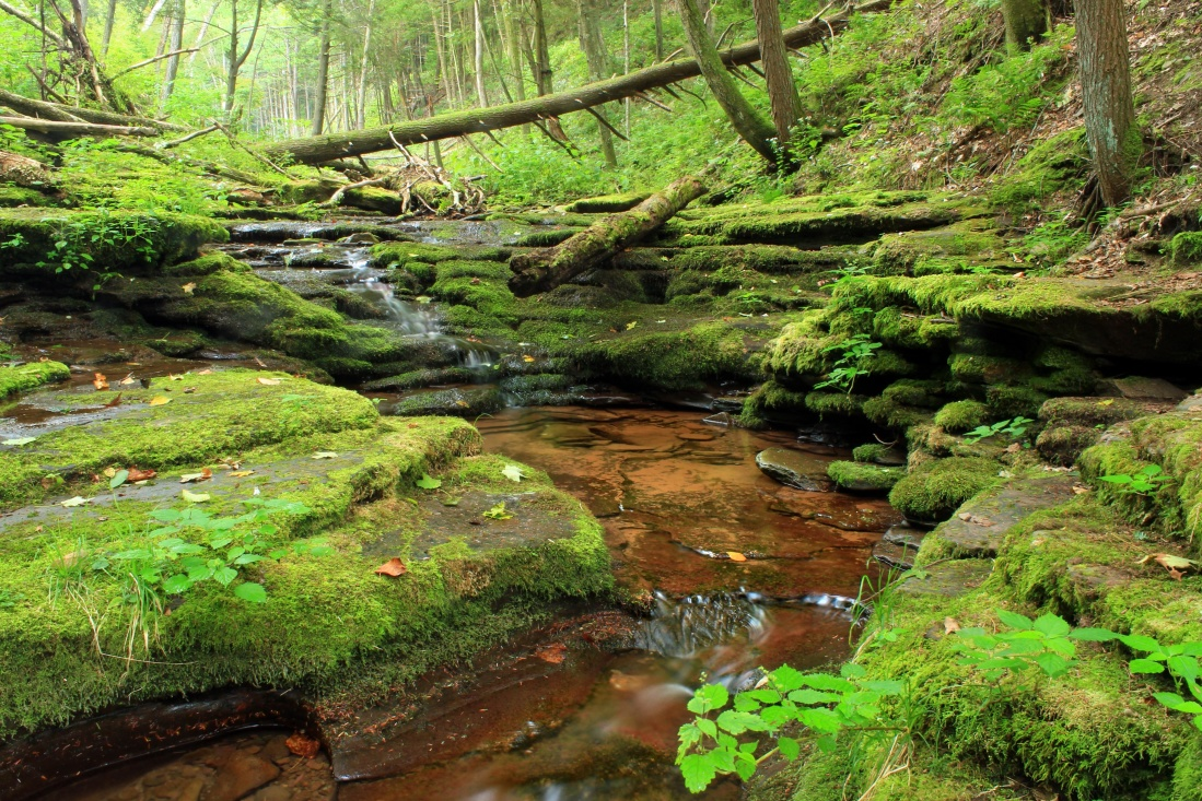 nature, wood, water, moss, landscape, river, leaf, stream, tree