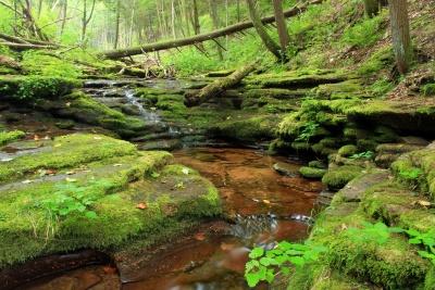 自然、木、水、苔、風景、川、葉、ストリーム、ツリー