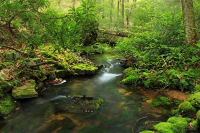 water, wood, nature, waterfall, stream, river, leaf, moss, landscape
