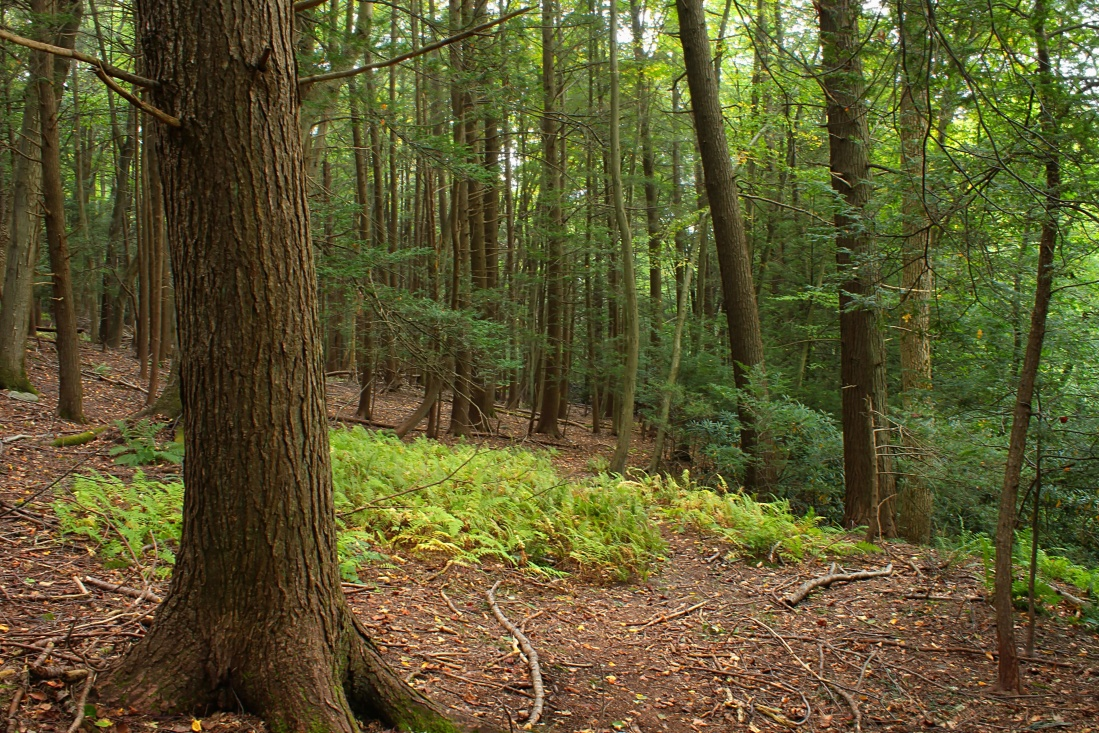 wood, tree, nature, grass, trees, forest, plant, summer, landscape, leaf, environment