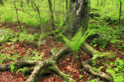 wood, nature, leaf, tree, landscape, fern, moss, environment, flora