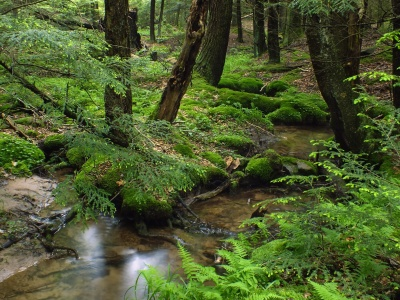 wood, nature, water, forest, landscape, moss, river, tree, stream, leaf
