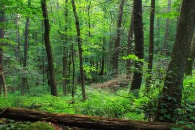 madera, paisaje, naturaleza, musgo, hoja, árbol, medio ambiente, bosque