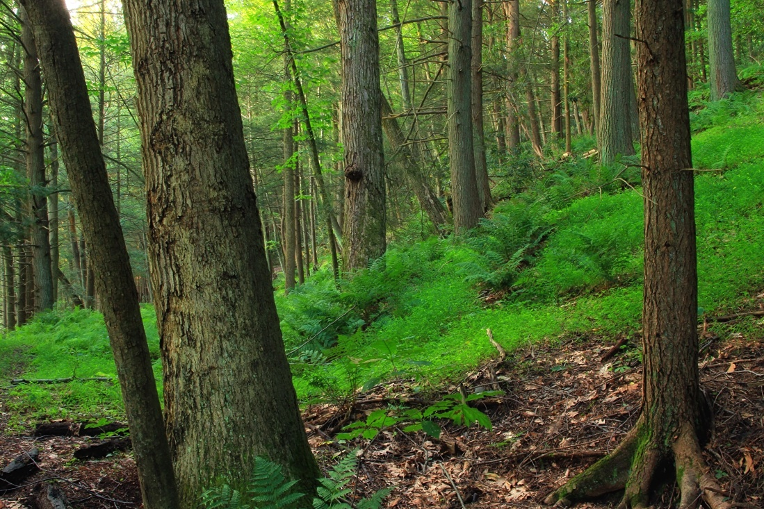 wood, tree, landscape, nature, leaf, fern, root, environment, forest