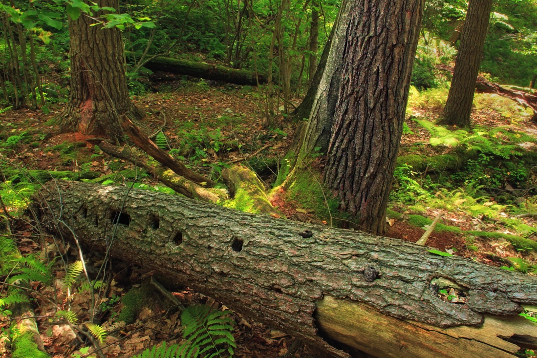wood, tree, nature, environment, bark, flora, moss, daylight, leaf, landscape