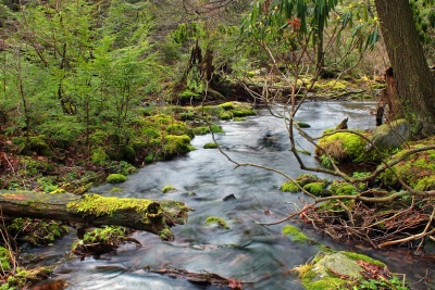 Wasser, Wasserfall, Umwelt, Bach, Fluss, Natur, Landschaft, Baum, Moos