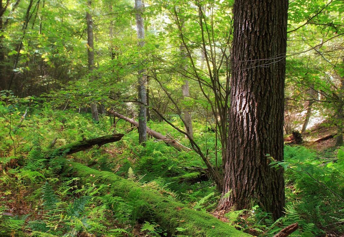 wood, tree, nature, oak, forest, landscape, leaf, environment
