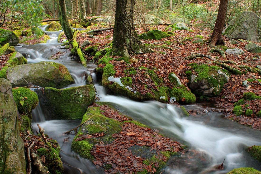 wood, leaf, nature, stream, water, moss, creek, waterfall, landscape