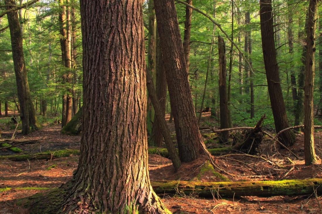 wood, tree, nature, root, oak, leaf, landscape, environment