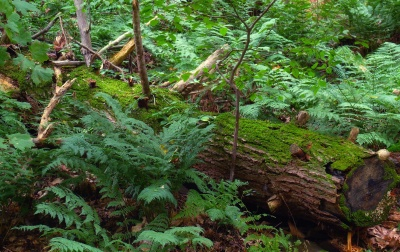 wood, fern, leaf, nature, moss, fern, tree, environment, flora