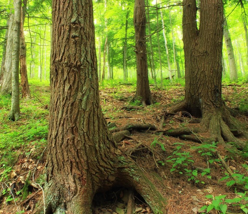 wood, tree, nature, leaf, landscape, root, oak, bark, environment