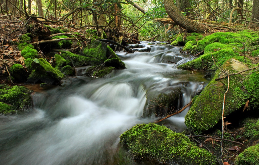water, waterfall, river, forest, stream, nature, wood, moss, creek, leaf