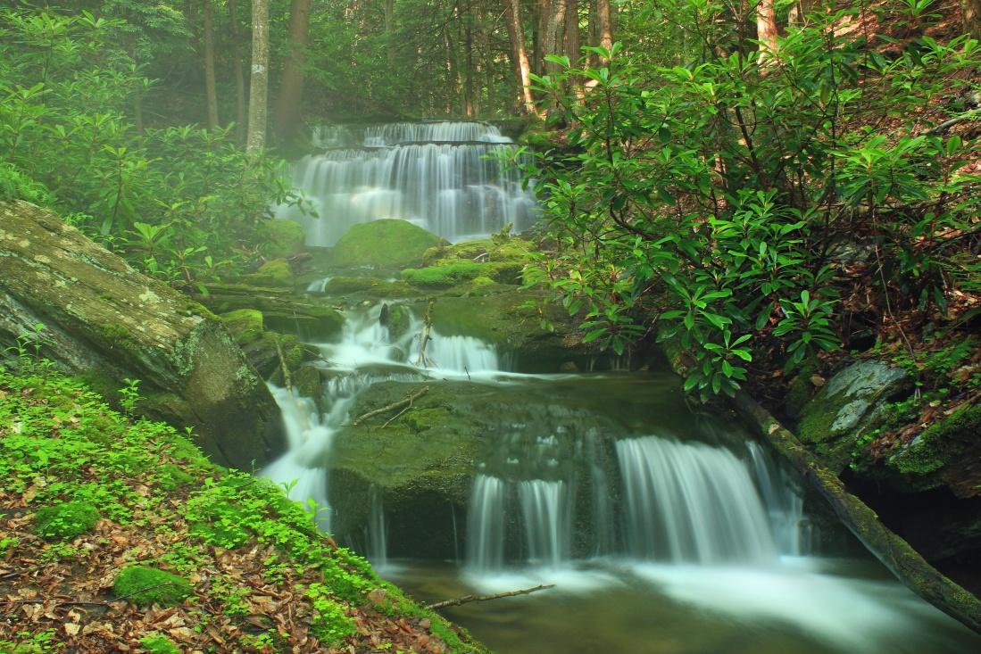 water, waterfall, wood, stream, nature, leaf, river, moss, creek