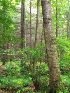 wood, nature, lichen, tree, leaf, landscape, moss, fern, grass, forest