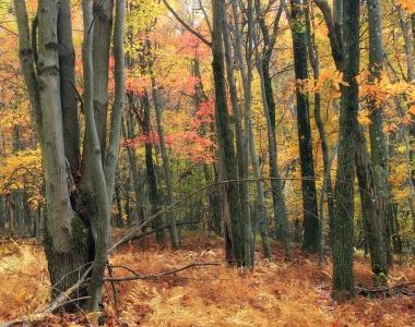 wood, leaf, tree, landscape, autumn, nature, beech, mist, fog, dawn, forest