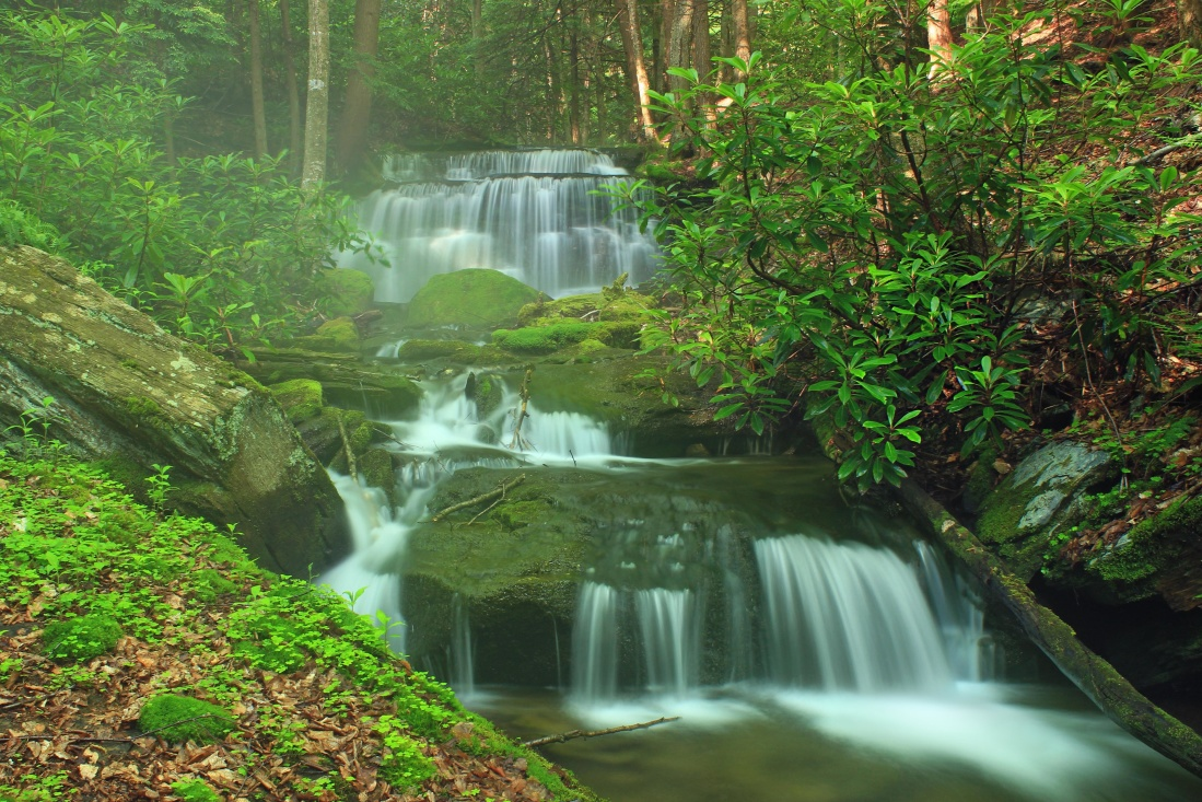 waterfall, forest, wood, stream, nature, riverbank, moss, creek