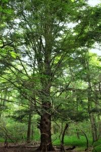 wood, tree, nature, leaf, landscape, forest, environment, flora, oak, forest