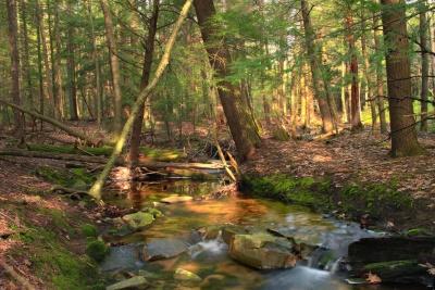 дърво, вода, пейзаж, природа, листа, река, дърво, водопад, гора