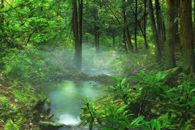 wood, landscape, nature, leaf, mist, moss, tree, water, environment, summer