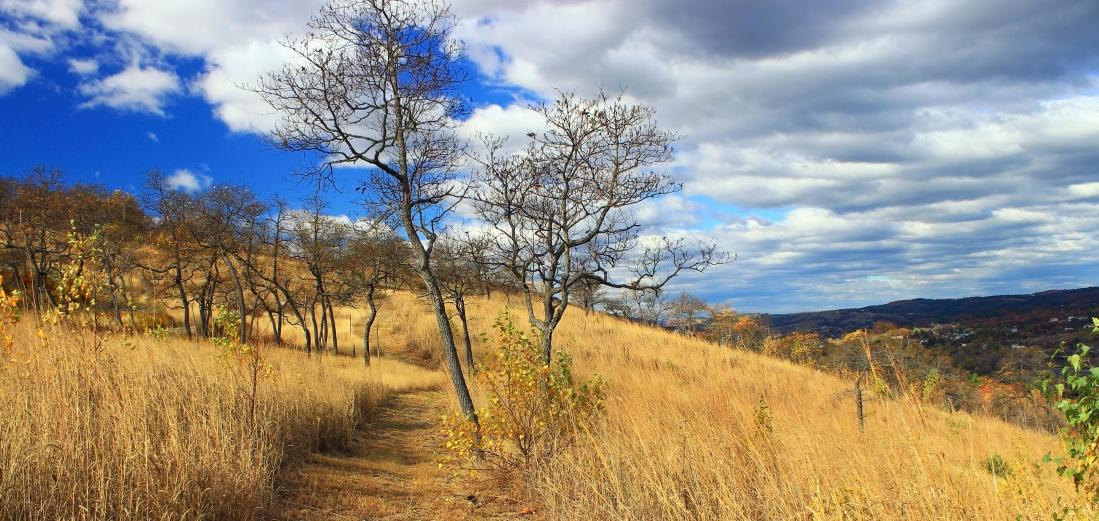 landscape, nature, tree, sky, grass, field, meadow, rural, cloud