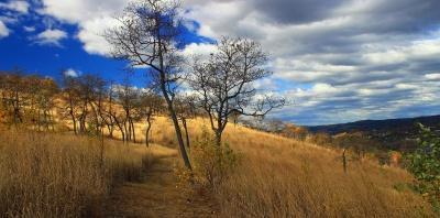 paysage, nature, aube, arbre, coucher de soleil, ciel, champ, Prairie, herbe