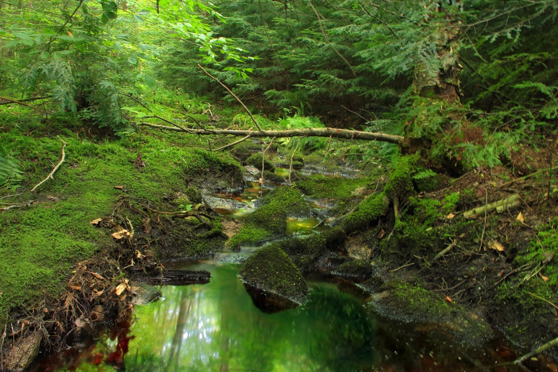 water, wood, nature, moss, landscape, leaf, river, tree, forest